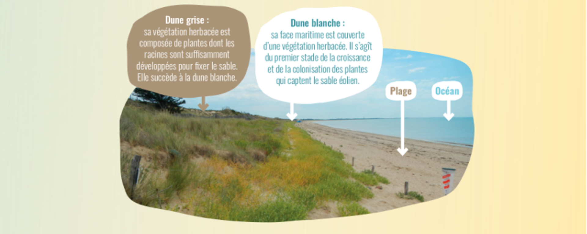 Dune grise et dune blanche