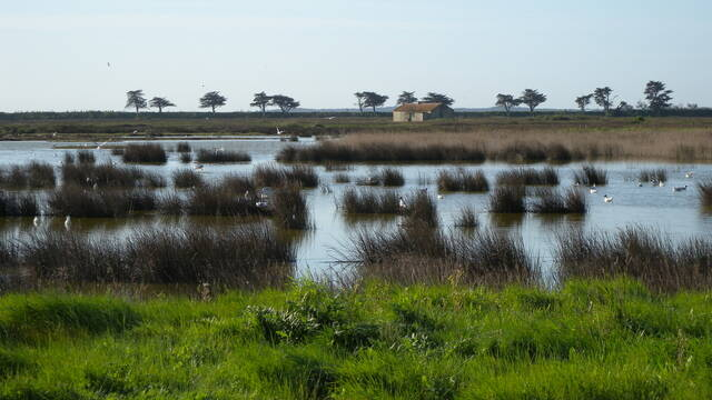 Réserve naturelle régionale du polder de Sébastopol