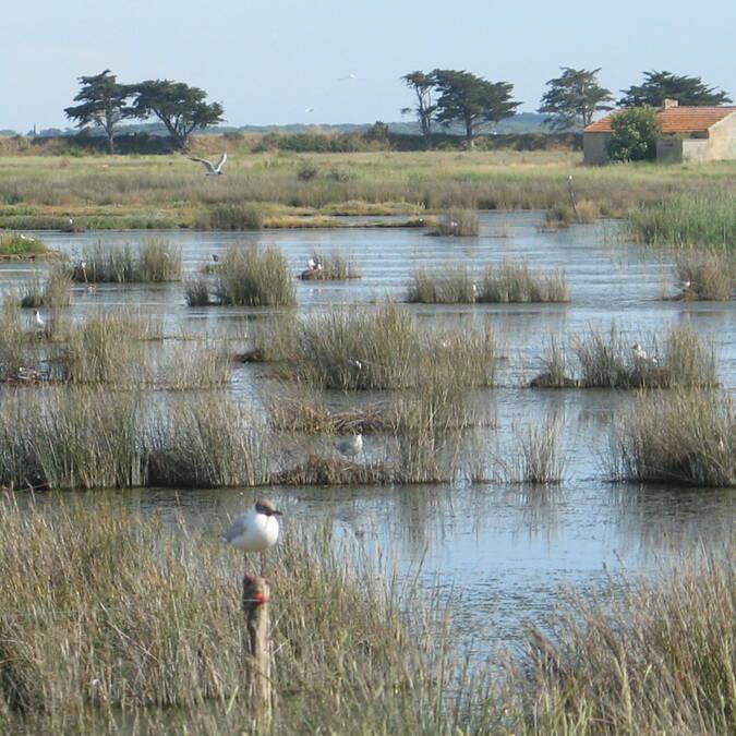 La Maison du vide, située au milieu du polder Sébastopol